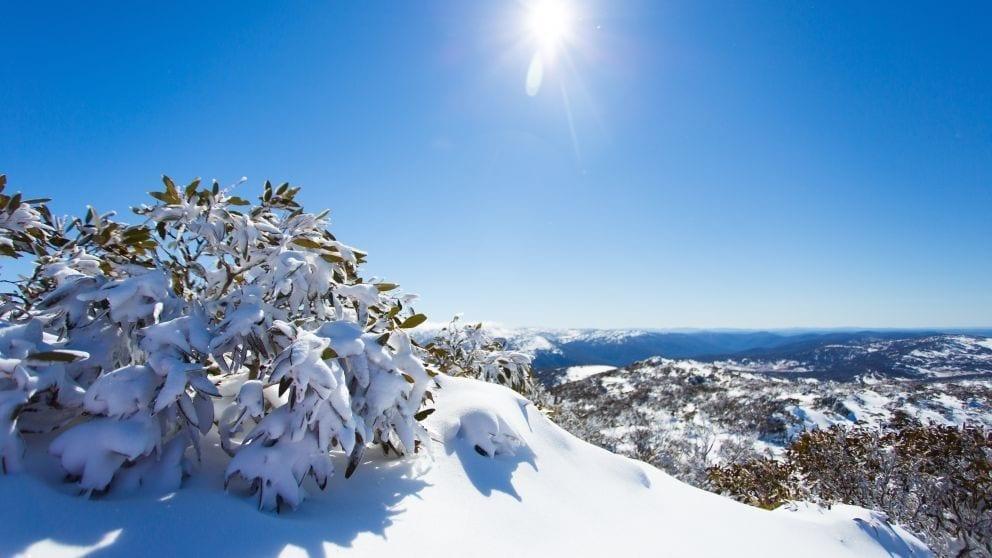 Snowy Mountain In Nsw